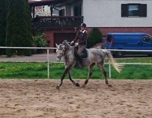 Springgymnastik mit Handryk´s Hiro am   #springen, #reiten, #pferde, #trakehner