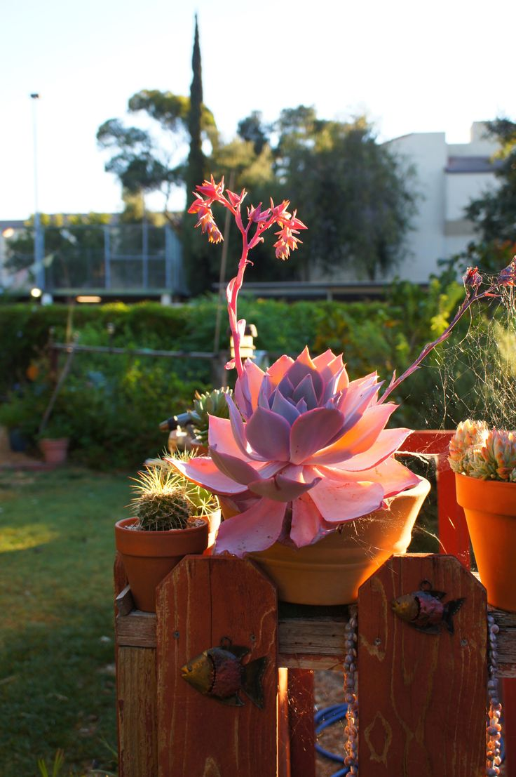 "flora-file: ""good morning ""prints | reblog | insta | web "" """