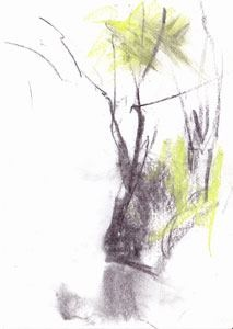 This week's look at the current issue of CR focuses on Barry Stedman. Strongly influenced by nature, here is one of his drawings his beautiful drawings from Flitwick Moor. It's easy to see how his drawing drives his pot making.