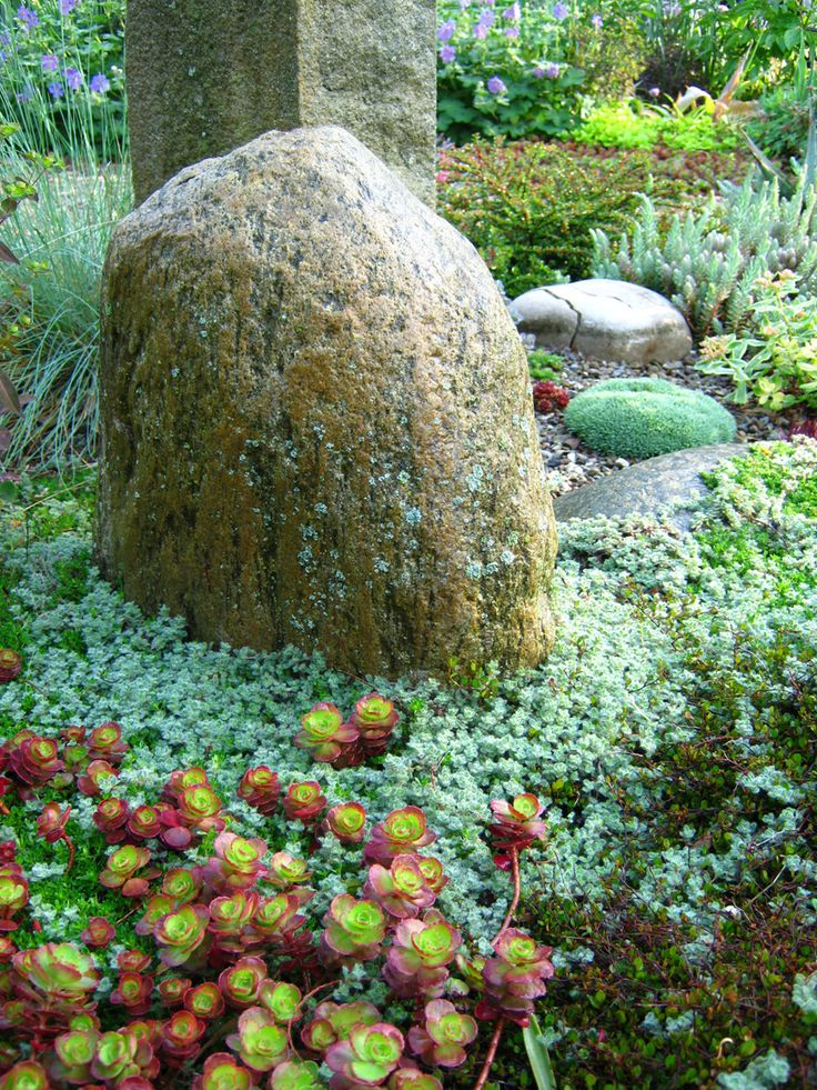 The perfect stone with the perfect sedum!: Flowers Succulents, Columbus Ohio, Rocks Gardens, Sedum Dragon, Tim Gardens, Readers Photo, Dragon Blood, Browser Window, Fine Gardens