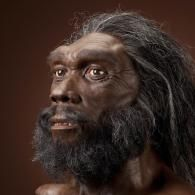 Homo heidelbergensis, reconstruction by John Gurche. This early human species had a very large browridge, and a larger braincase and flatter face than older early human species. It was the first early human species to live in colder climates; their ­­­short, wide bodies were likely an adaptation to conserving heat. Learn more at: http://humanorigins.si.edu/evidence/human-fossils/species/homo-heidelbergensis