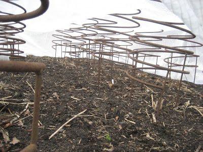 Fru Pedersens have: Dahlia på vej. Når vinterdækningen fjernes, bliver jorden kultiveret og ukrudt fjernet. Derefter sættes staudestativer, en over hver plante. Derover lægges et stykke armeret klar plastik, så er der lidt drivhuseffekt. Disse staudestativer er lavet af byggeaffald. Fjedrene sad om noget rullearmering. Smeden har svejset ben på.