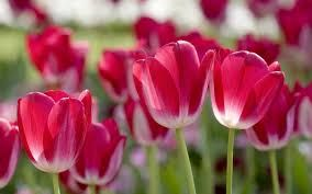Image result for free spring screensavers