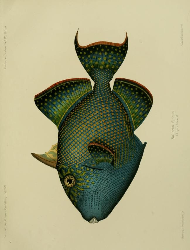 Journal des Museum Godeffroy, Vol VI, 1873-1910.