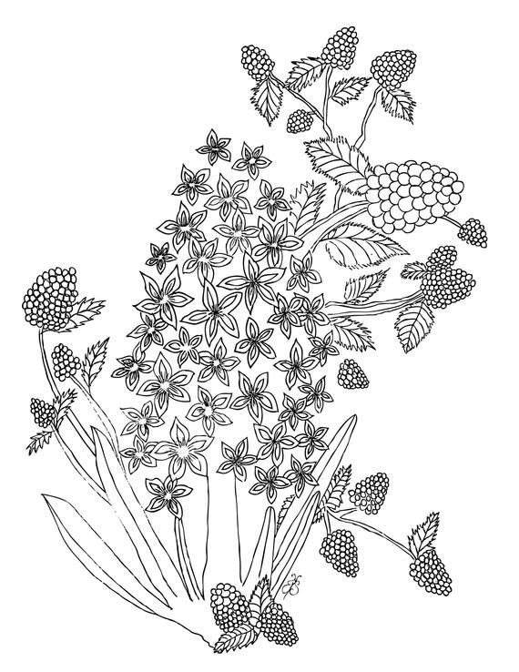 Hyacinth And Raspberries Printable Coloring Pages Amazing Art