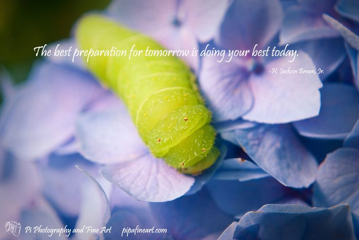 The Best Preparation For Tomorrow Is Doing Your Best Today: 17 Best Images About Attitude Of Gratitude On Pinterest