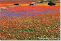 Namaqualand - Bucket list