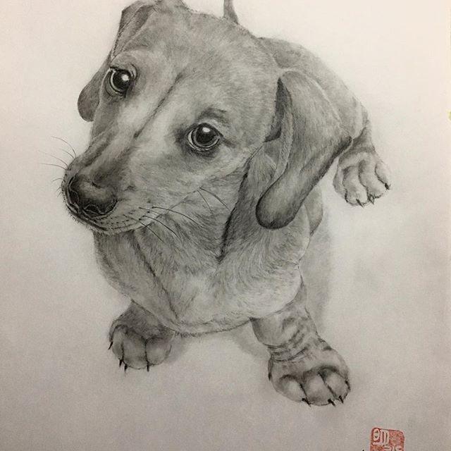 春です。春でますね。でもやっぱり夏が好き。 #鉛筆 #鉛筆画 #似顔絵 #愛犬  #dogs #cats #art #photography  #pencil #pencilart #pencildrawing  #drawing #artgallery #artist #like  #picture #cute #design #doodle  #sketch #illustration #disney  #かわいい #いぬすたぐらむ #カフェ #かっこいい #インテリア #花見