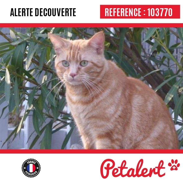 17.12.2016 / Chat / Colomiers / Haute-Garonne / France