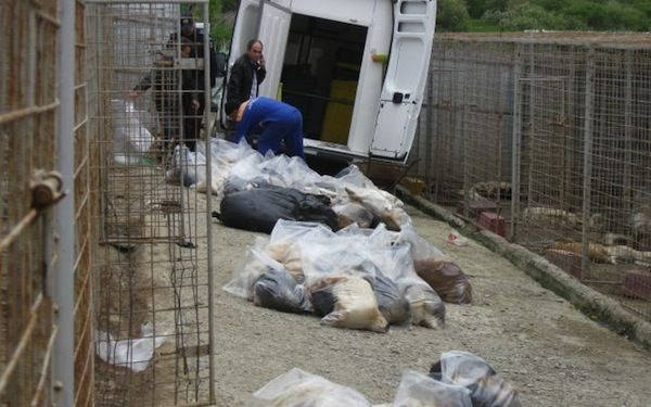 "Romania:Cristian Pancu the ""Vet"" kills 240 dogs..euthanized them? Why did they had to clean blood from the kennels???"