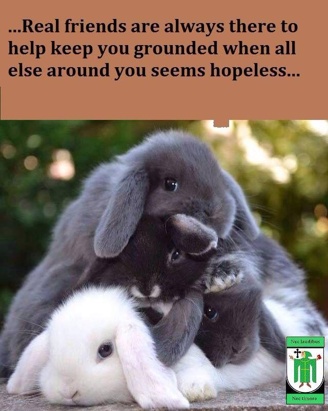 Bunny Wisdom xx