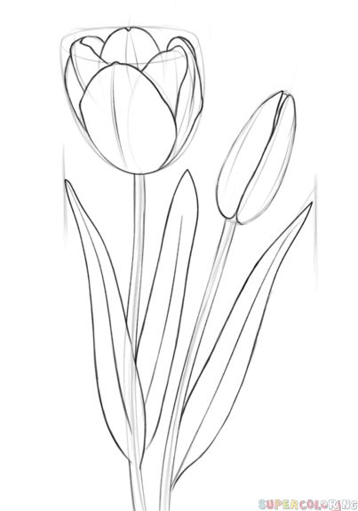 How to draw a tulip step by step. Drawing tutorials for kids and beginners.