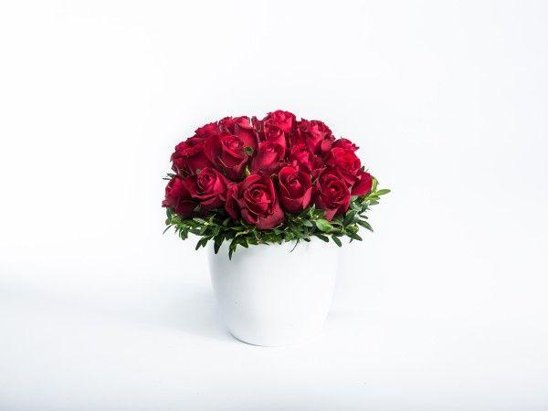 20 Red Roses in a white ceramic pot. www.fleurus.com.au