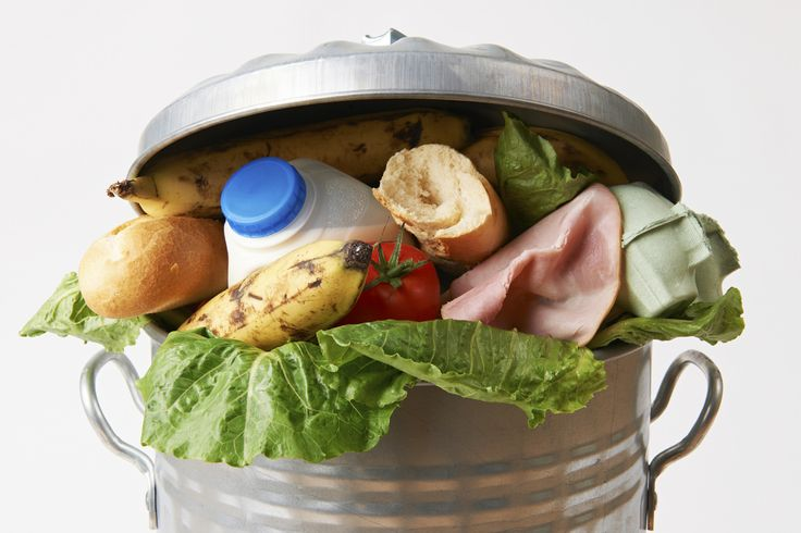Hungry for Change and Wasting Away: Food Waste in America