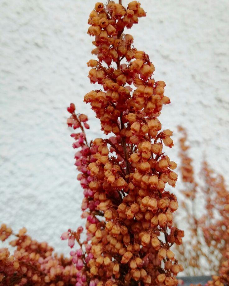 Flores secas sobre fondo blanco