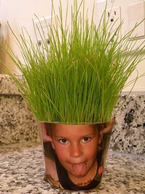 Wheatgrass Seeds and a Silly Photo!