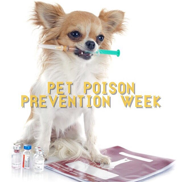 It's Pet Poison Prevention Week !   Tip #1: Keep your OTC medications out of reach and in a locked cabinet.  Did you know 43% of all calls to the Pet Poison Prevention Hotline result from animals who have invested their owners OTC medications?  If your pet gets poisoned call the Pet Poison Hotline at 1-855-764-7661.  #KeepYourPetSafe #HealthPets #instapet