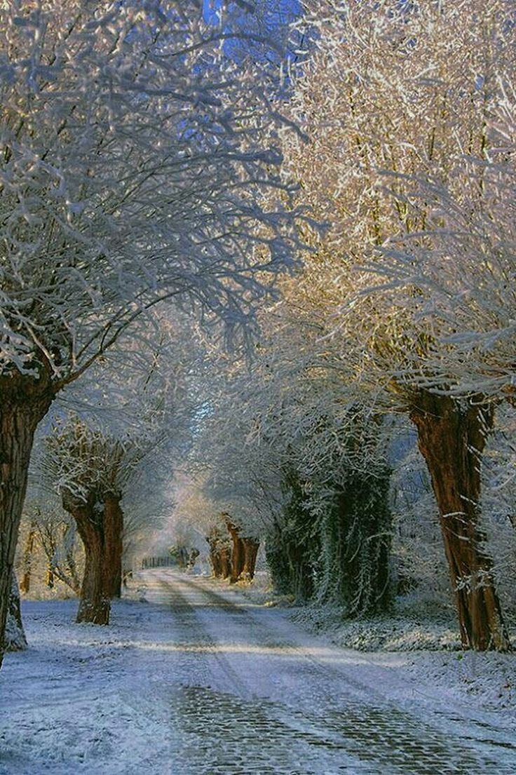 Winter Beauty / Country
