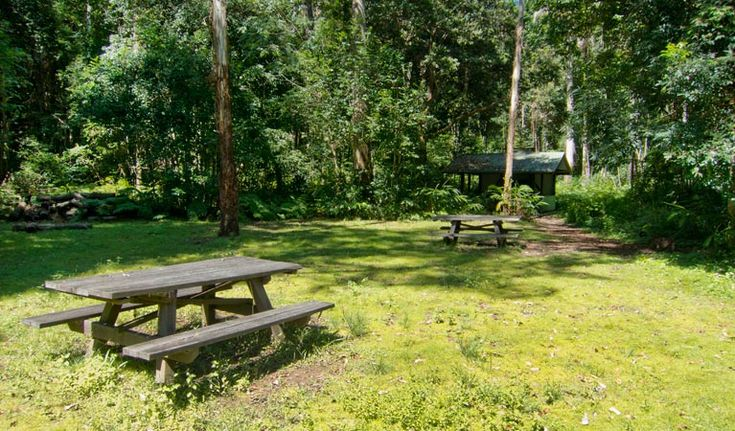 rainforest camping lions road nsw - Google Search