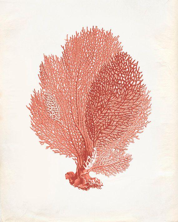 Vintage Sea Fan Coral Print 8x10 P251 by OrangeTail on Etsy