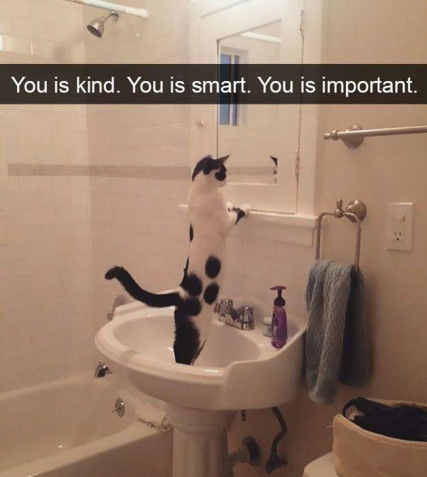 20 Funniest Animal Snapchats