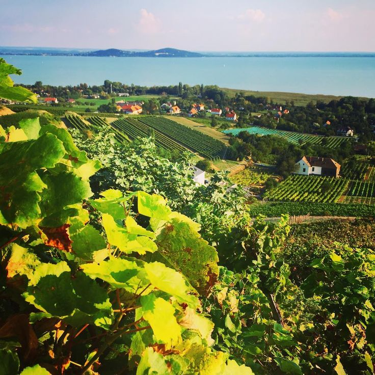 Lake Balaton seen from Laposa Wine Terrace at Badacsony, Hungary. Visit it with Budapest 101 on a private wine tour!