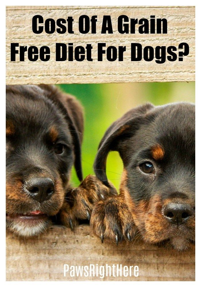 Costs Of A Grain Free Diet For Dogs Dogs Dog Training Tips Dog