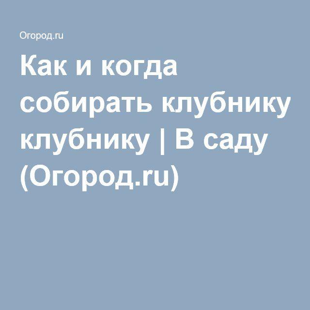 Как и когда собирать клубнику | В саду (Огород.ru)