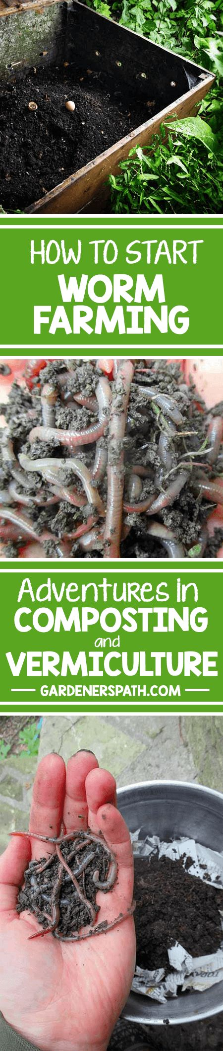 Earthworms are amazing garden pals – and powerful composters. Learn how to harness their talents by vermicomposting, and start your own home DIY worm farm! http://gardenerspath.com/how-to/composting/worm-farming-vermiculture/