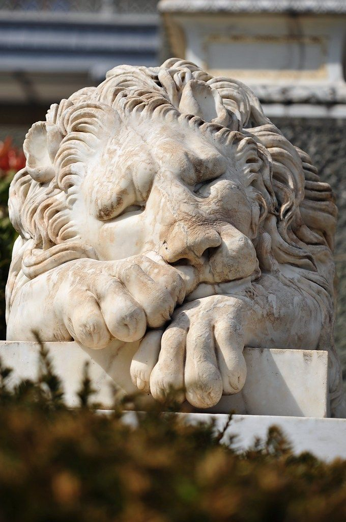 Sleeping Lion statue at Chatsworth House, Derbyshire, England.                                                                                                                                                      More