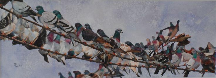 Best Watercolour - Pam Quinlan - Pigeons
