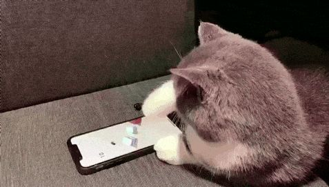 See, cats are smart, so they deserve phones