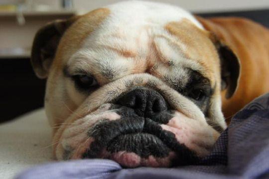 Załoga Bulldoga