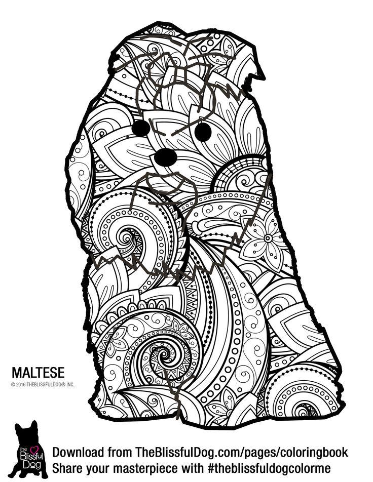 32 best MALTESE images on Pinterest