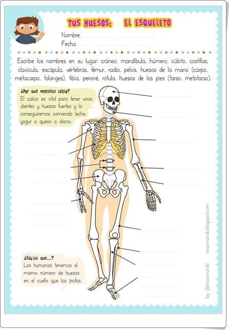 """""""Tus huesos: El esqueleto"""" (Ficha de Ciencias Naturales de Primaria de Eva Barceló)"""