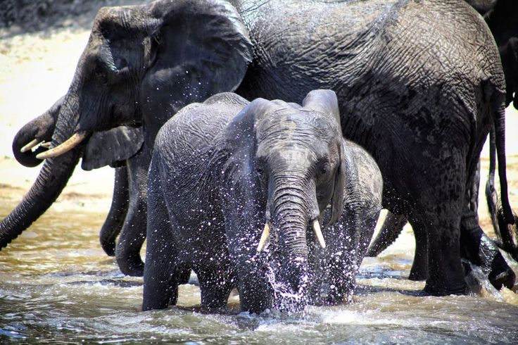 Elephants just want to have fun!