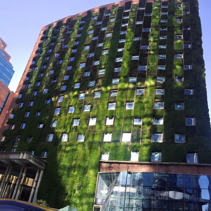 Intercontinental Hotel in Chile update on this gorgeous GLTI Green Living Wall!