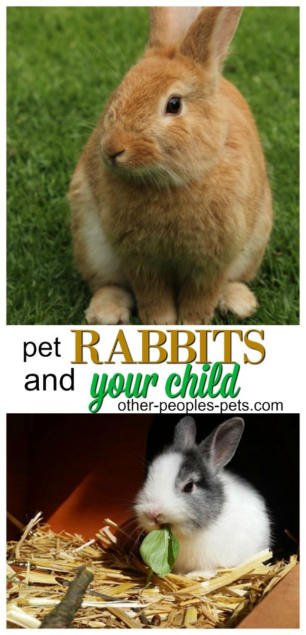 Are Rabbits Good Pets For Children What You Should Know In 2020 Pet Rabbit Litter Training Rabbits Pet Sitting Business