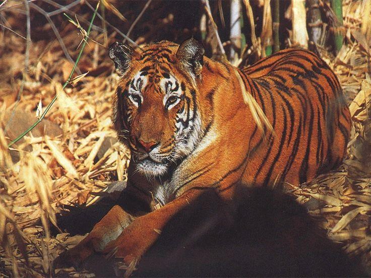 Nameri Tiger Reserve - in Sonitpur, Assam, India