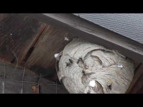 El Paso Mice Control And Mouse Removal  El Paso Pest Control Pros