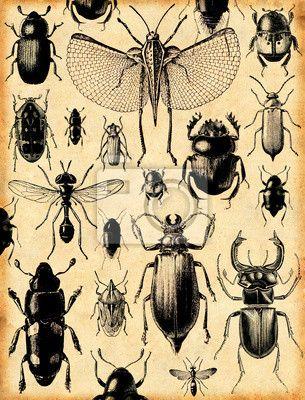Fotobehang insecten retro achtergrond