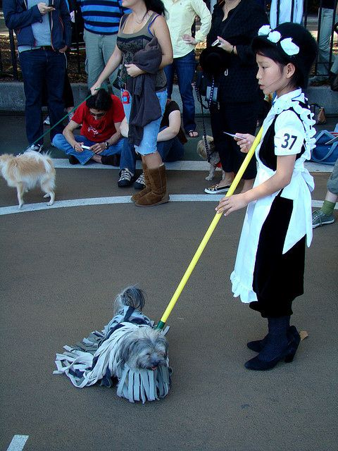 mop dog....this was pretty creative and funny