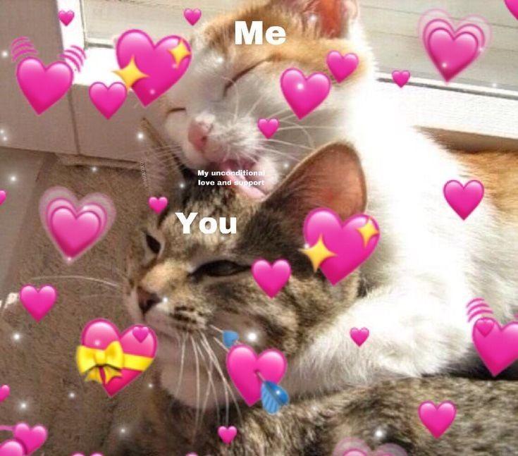 Cute Cat Memes Meme Funny Cute Love Sweet Cute Cat Memes Cute Love Memes Cat Memes
