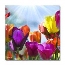 Pour une décoration murale contemporaine.Ce tableau de tulipe multicolore fera arriver le printemps avant l'heure dans votre salon.Ce tableau déco en impression numérique est une exclusivité boniday.Tableau disponible en 50x50 cm ou 70x70 cm