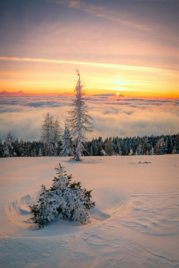 Sunset in a small forest of Carinthia, Austria