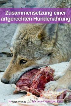 Da unsere Hunde, ganz gleich, ob kleine, mittlere oder große Rassen, und die heutigen Wölfe gemeinsame Vorfahren hatten, gibt es meiner Meinung nach nur eine artgerechte Zusammensetzung des Futters, nämlich die, die der Ernährung des freilebenden Weiterlesen ...