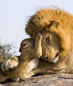 belles images animaux sauvages                                                                                                                                                                                 Plus