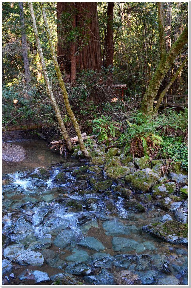 샌프란시스코 지역의 원시림 Muir Woods
