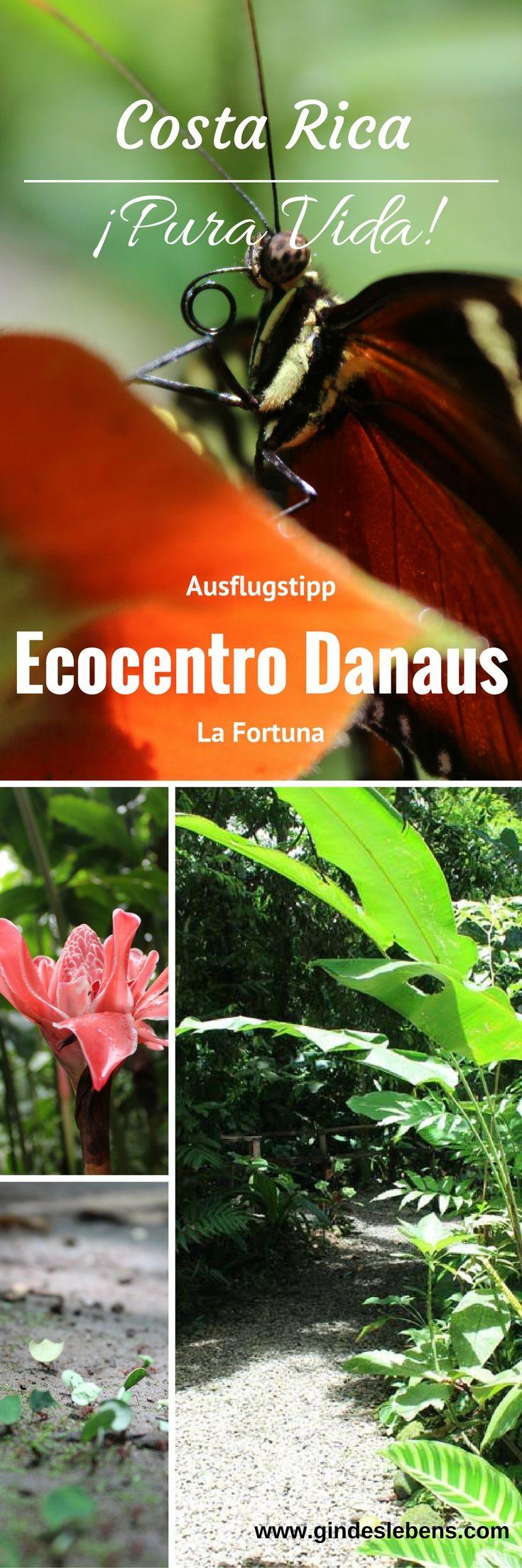 Ausflugstipp Ecocentro Danaus - Costa Rica Roadtrip Ausflüge in und um La Fortuna. Das Ecocentro Danaus ist ein privates Naturschutzgebiet in dem die Tiere jederzeit kommen und gehen können. Sie werden auch nicht gefüttert. Was natürlich viel besser ist als sie in Gefangenschaft zu halten und damit von ihrem instinktivem Verhalten zB. durch Füttern abzuhalten. Es gibt geführte Touren, aber das Naturschutzgebiet kann auch auf eigene Faust erkundet werden. Wenn man genau schaut, findet man…
