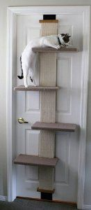 $34.15 SmartCat Multi-Level Cat Climber. This is great for city apartments that don't have much room. All  you need is a nice door frame. Us city dwellers know every inch of space we save is sacred. And we're happy & kitty is happy.